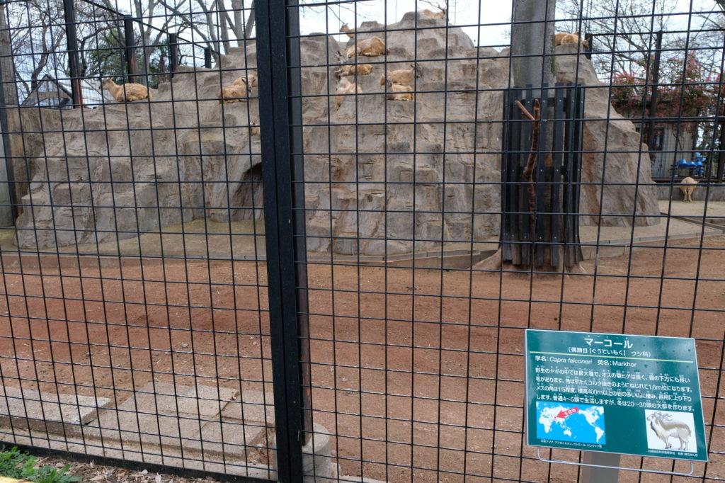 夢見ヶ崎動物公園 マーコール