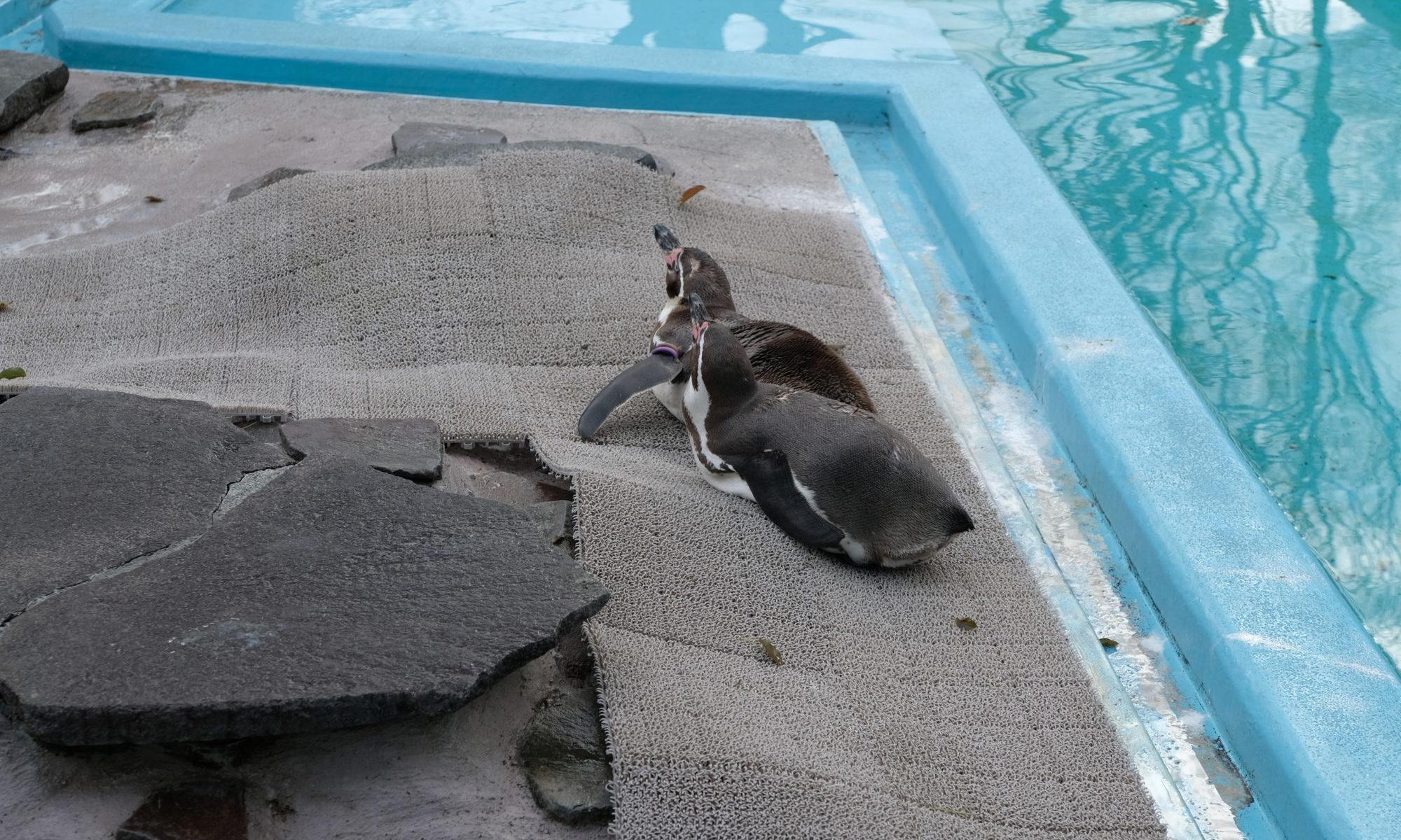 夢見ヶ崎動物公園 ペンギン