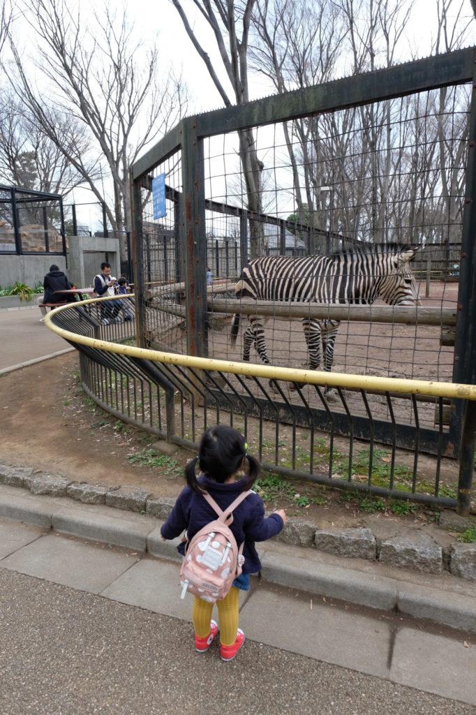 夢見ヶ崎動物公園 シマウマ