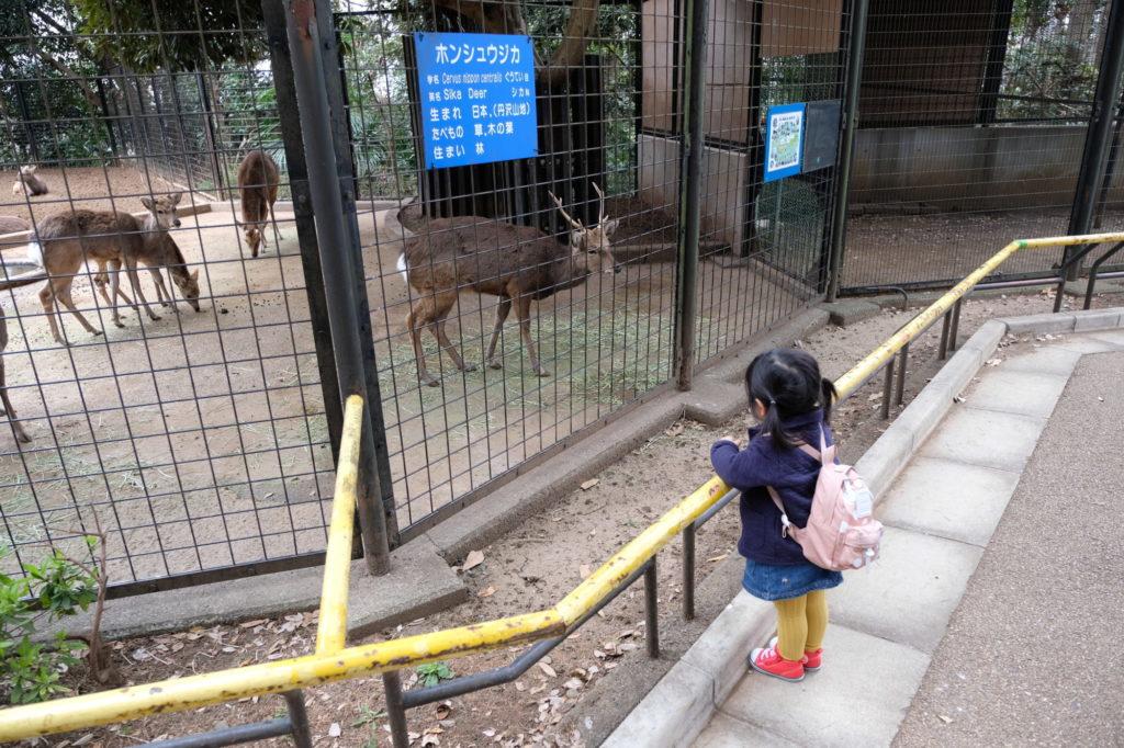 夢見ヶ崎動物公園 しか