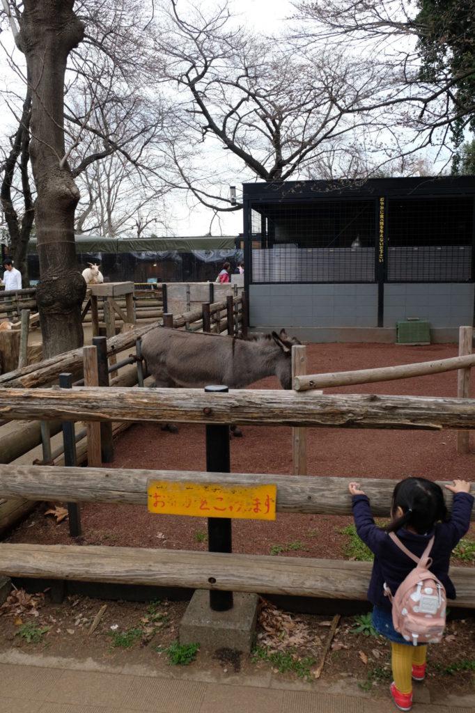 夢見ヶ崎動物公園 ロバ